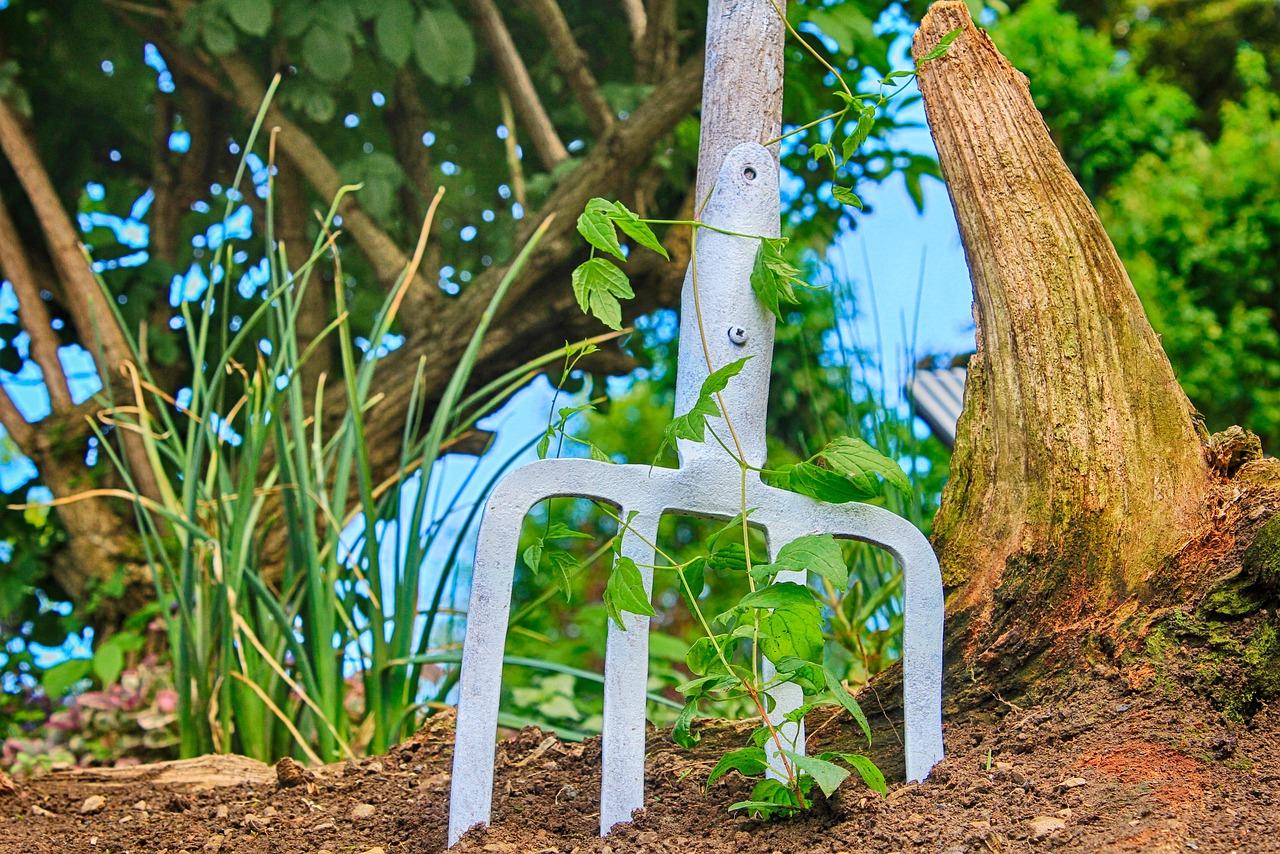Mikoryza, czyli życiodajna współpraca roślin z grzybami